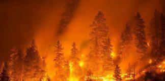 la Calabria brucia